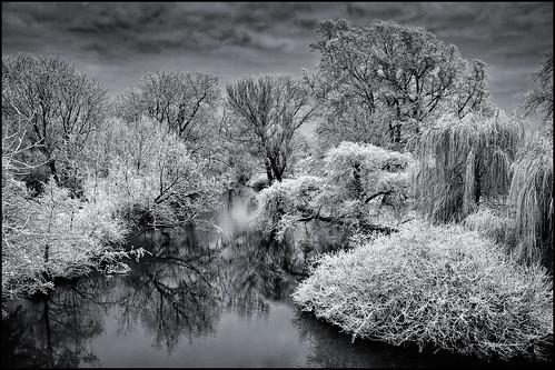 UK - Oxford - University Park in Winter v2_mono