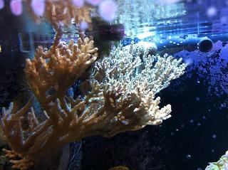 Aquarium Update - April 2013 | by devonmorton