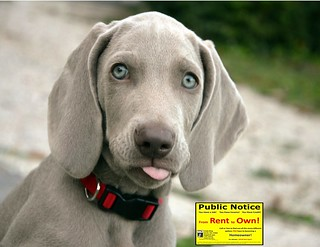Cute Puppy Fun Photo Never Rent Again Century 21 Award San