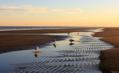 sunset sky seagulls beach reflections southcarolina proverb hiltonheadisland colignybeach canoneosrebelt2i shannonroseoshea