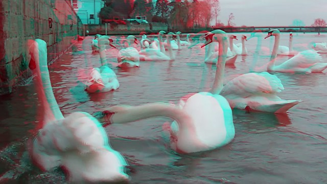 Many Swans - 3d movie clip - anaglyph