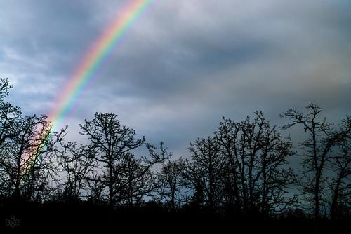 coopermountainnaturepark oregon pcmicronikkor85mmf28d rainbow beaverton unitedstates silhouette trees fav10 roygbiv
