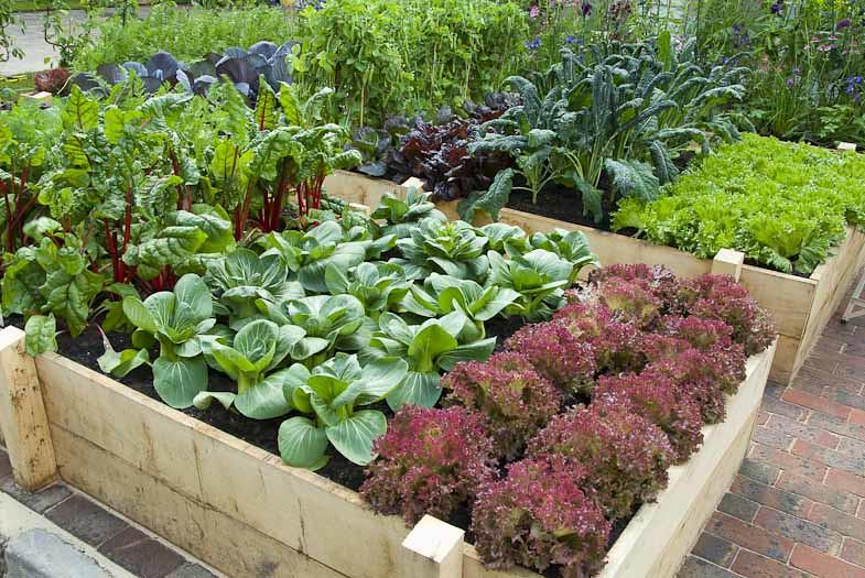Raised Vegetable Garden   Raised Bed Vegetable Garden In Bac ...