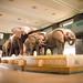 Natural History Museum by Carlos Adampol