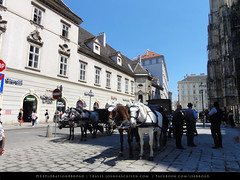 Horses at Stephenplatz