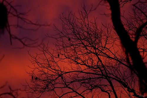 trees sunset sky usa birds dark georgia evening dusk south spooky savannah