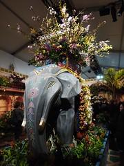水, 2013-04-03 15:37 - Macy's Flower Show 2013