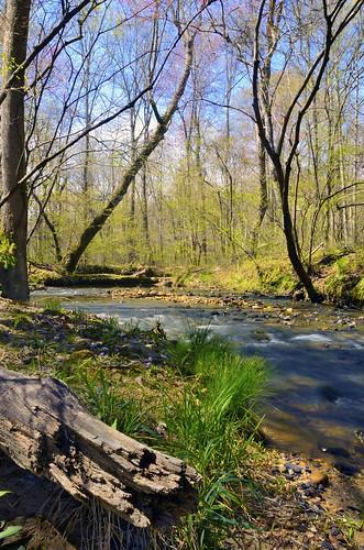 nature water creek georgia landscape spring stream logs waterscape mygearandme mygearandmepremium vigilantphotographersunite vpu2