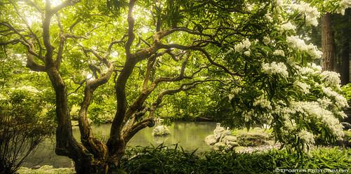 light tree green beautiful forest garden portland interesting lush japanesegardens exciting thetree tylerporter