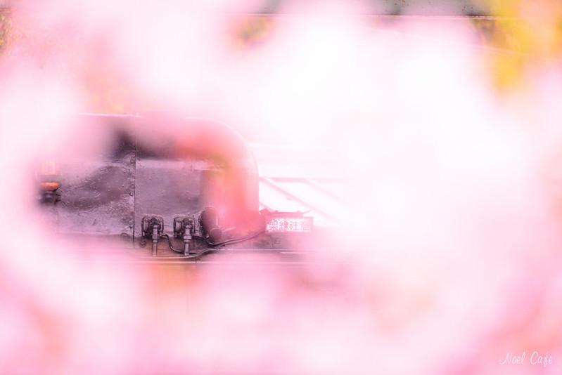 桜の窓 by Noël Café