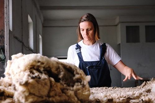 sorting and grading fleece   by Rosa Pomar