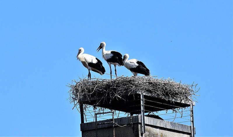 Storks 30.06 (2)