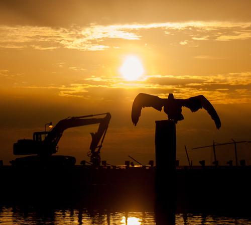 silhouette mississippi unitedstates pelican biloxi mississippigulfcoast herowinner ultraherowinner