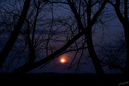 sunset japan evening spring nikon branch niigata f56 50mmf14 d90 nikkorsc50mmf14 2013 nikkorsc50mmf14c sc50mmf14