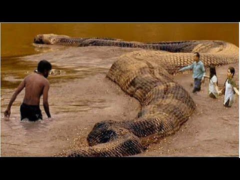 الجزء الثالث أكبر ثعبان على وجه الأرض الأناكوندا العملاق Flickr