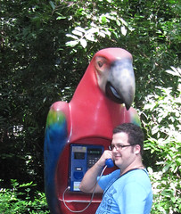 The Parrot Phone