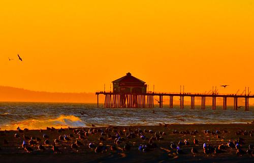 ocean california sky beach nature water birds outdoors restaurant coast amber pier sand waves wildlife splash huntingtonbeach blinkagain