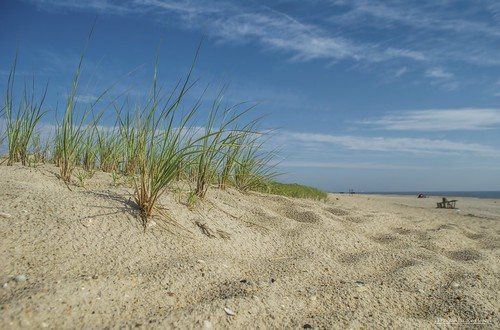 delaware rehobothbeach sand sandunes dunegrass lowerslowerdelaware lsd bluesky blue atlanticocean ocean outdoor sea seascape seaside seashore beach morning morninglight summer summertime clouds cloudsbluesky