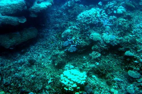 barrier_reef-1-17-03 (54) | by gideonariel1