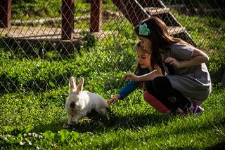Run Rabbit, Run! :)   by MLazarevski