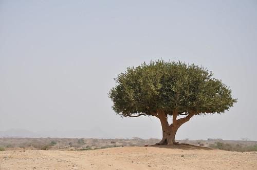 Trees in a dry land   by Julien Harneis