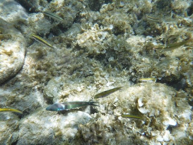 水, 2016-07-13 11:47 - 魚の群れ