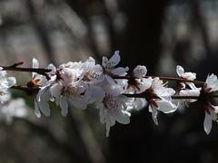 土, 2013-03-30 10:47 - ブルックリン植物園