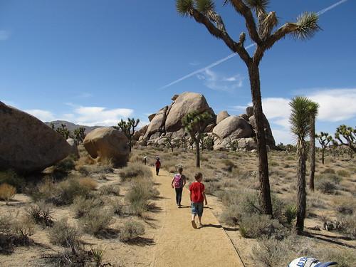 Cap Rock Hike, Joshua Tree National Park, California | by Ken Lund