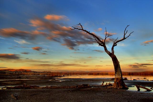 Wetland Dusk