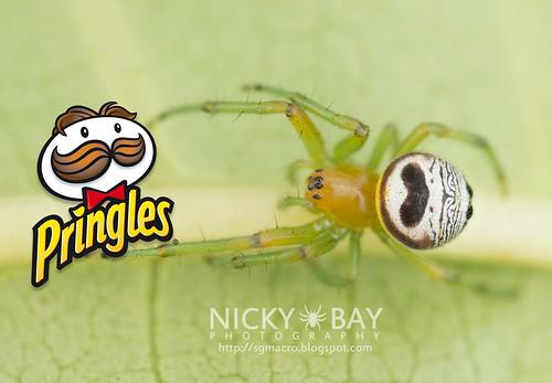 Kidney Garden Spider (Araneus mitificus) - DSC_0931b | by nickybay