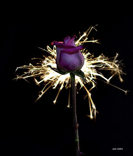 Rose Sparks | by Jackx001