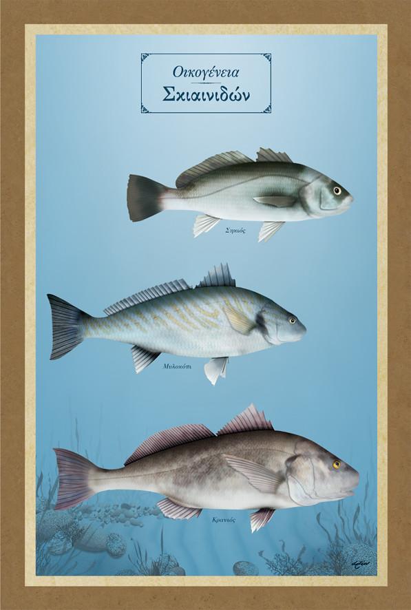 Ψάρια στη θάλασσα dating app