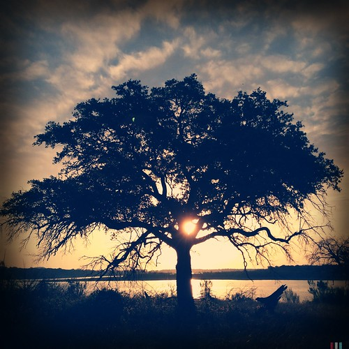 tree silhouette sunrise texas noflash sunrisesunset solotree stillhousehollowlake iphoneography hipstamatic tejaslens purehipstamatic blankofreedom13film hipstaconnect mxgxpxchallenge hipstaweekly