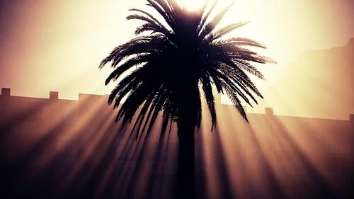 sun beach nature sunshine sunrise southafrica capetown palmtree