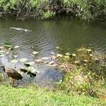 Miami, Everglades 05