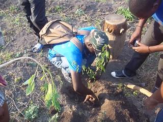FETE DE L'EAU A SAUT-D'EAU - a reforestation session.