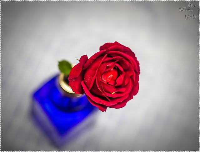 Una rosa ...