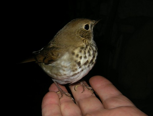 Bird in hand, priceless