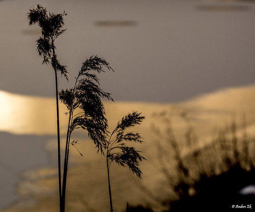 sunset river sonyalphaslta77 sal1650 sony1650f28 sonyalphadslra77