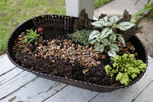 Miniature Garden | by jenniferworthen