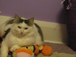 Firsilar the cat sits on Tigger | by Helena Jacoba