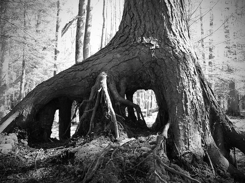 Root System | by ChadCooperPhotos