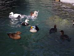 水, 2013-04-03 14:36 - Central Park Zoo