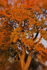 fall foliage | by SouleMama