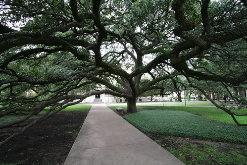Century Tree at Texas A&M | by eschipul