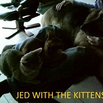 2014-12-18 004 (1024x819) Jed & kittens