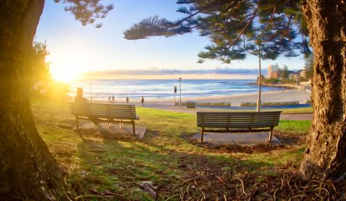 sunrise winter cronulla nsw australia bench seat trees green