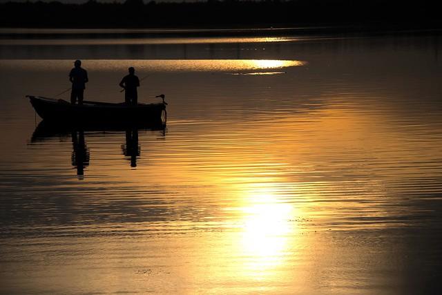 hunting gold fish