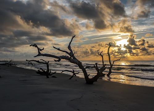 georgia wassawisland sunrise boneyard beach clouds sand trees deadtrees