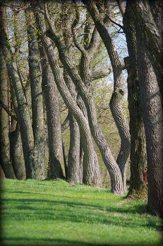 trees nature outside spring pa hanover codorusstatepark